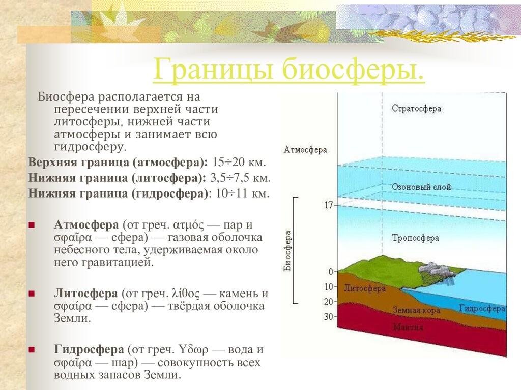 Границы биосферы. Биосфера располагается на пер...