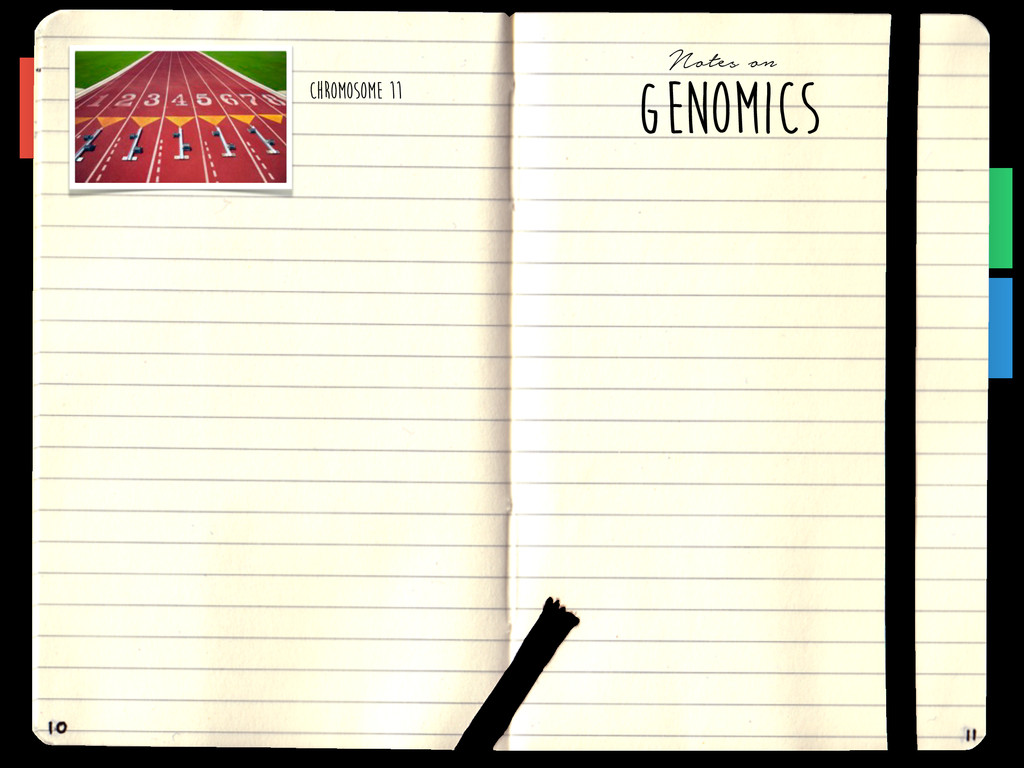 Chromosome 11 GENOMICS Notes on