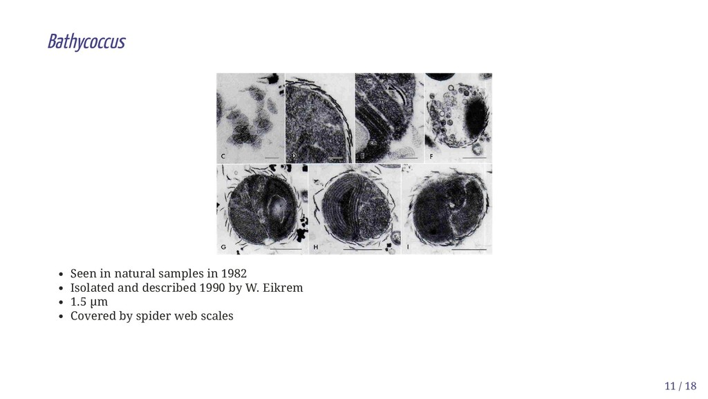 Bathycoccus Seen in natural samples in 1982 Iso...