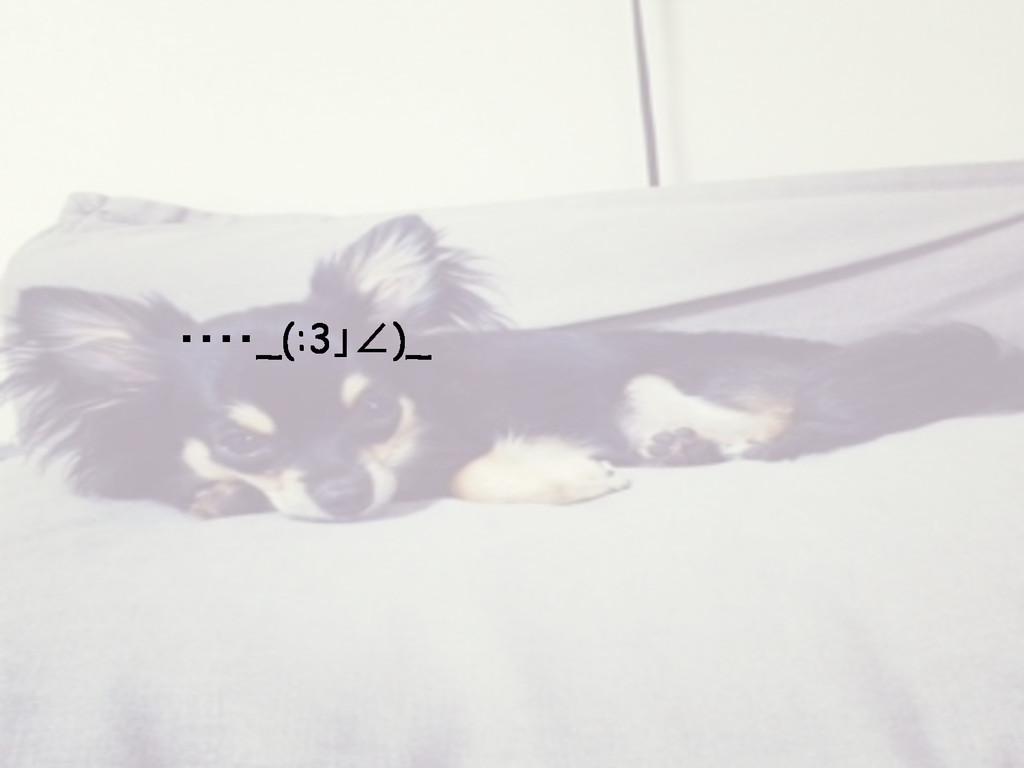 ・・・・_(:3」∠)_