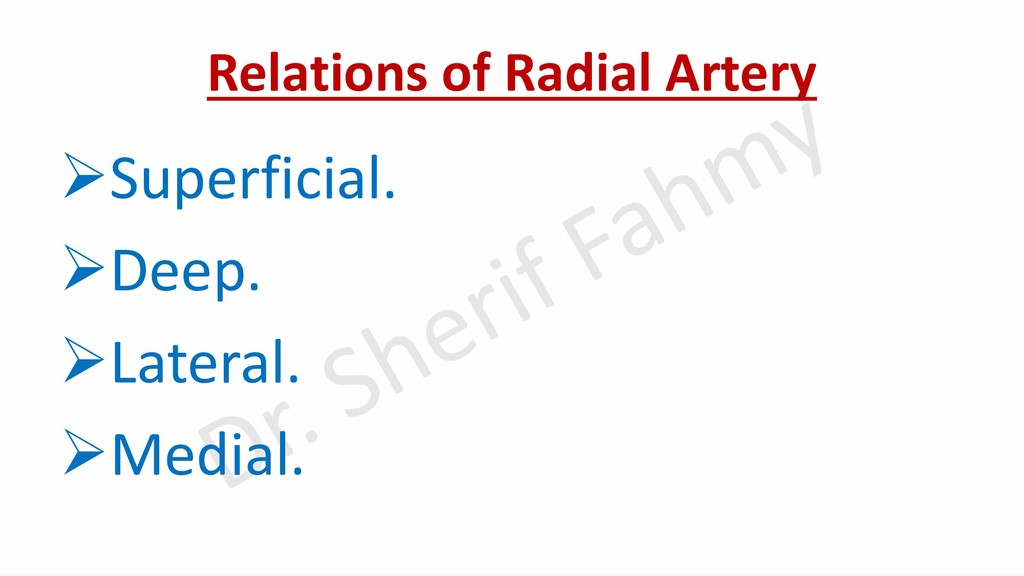 Relations of Radial Artery ➢Superficial. ➢Deep....