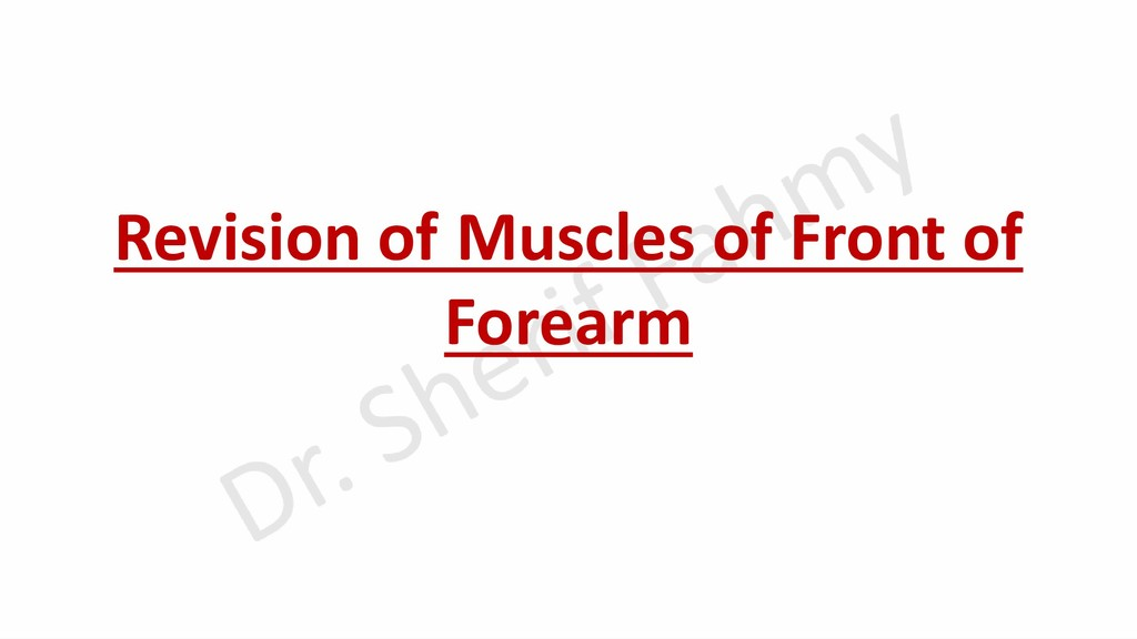 Revision of Muscles of Front of Forearm