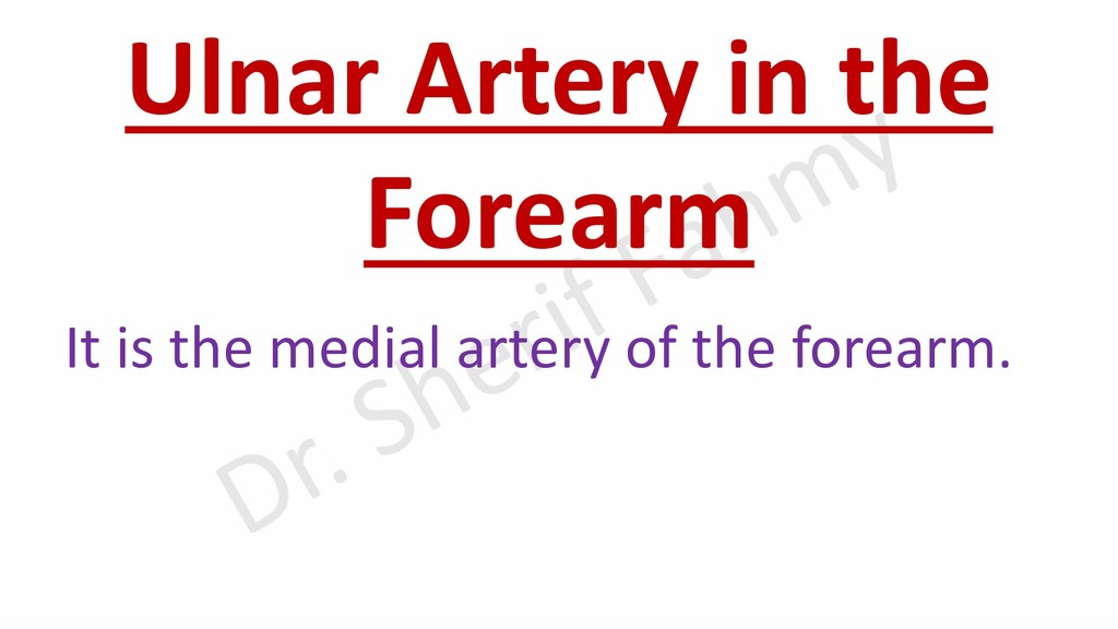 Ulnar Artery in the Forearm It is the medial ar...