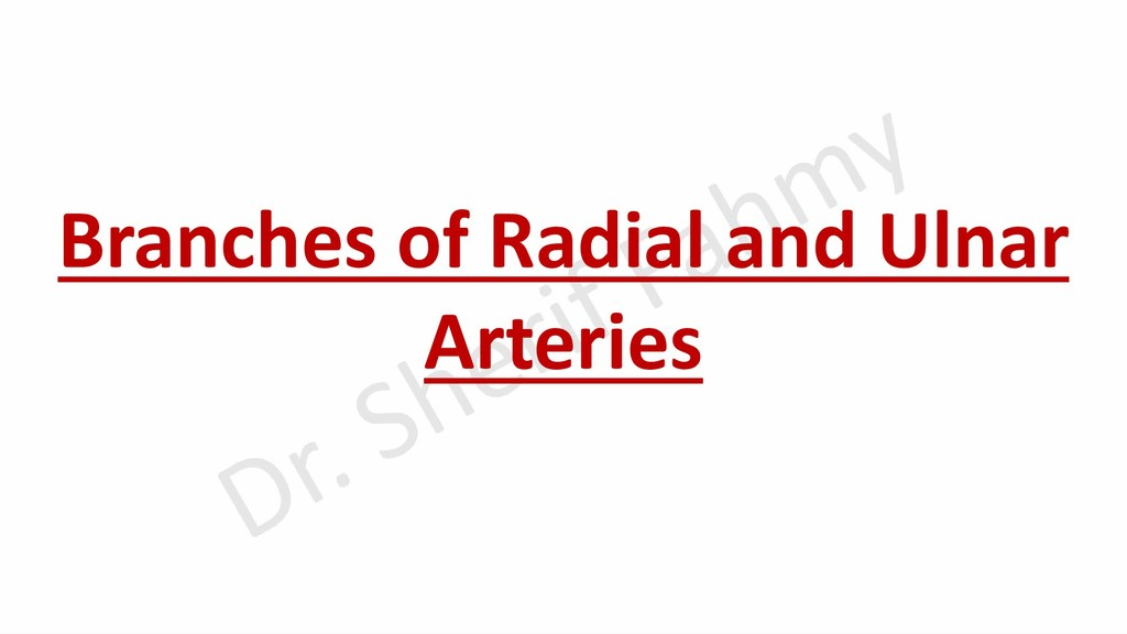 Branches of Radial and Ulnar Arteries