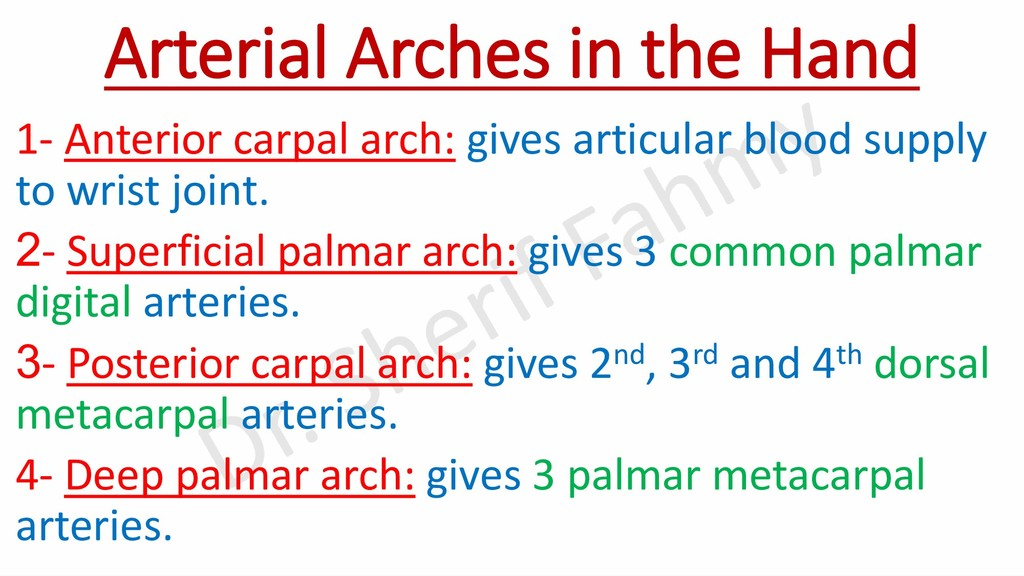 Arterial Arches in the Hand 1- Anterior carpal ...