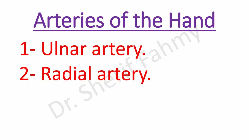 Arteries of the Hand 1- Ulnar artery. 2- Radial...