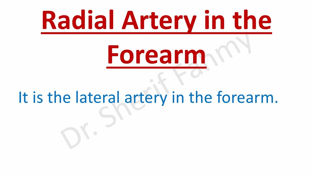 Radial Artery in the Forearm It is the lateral ...