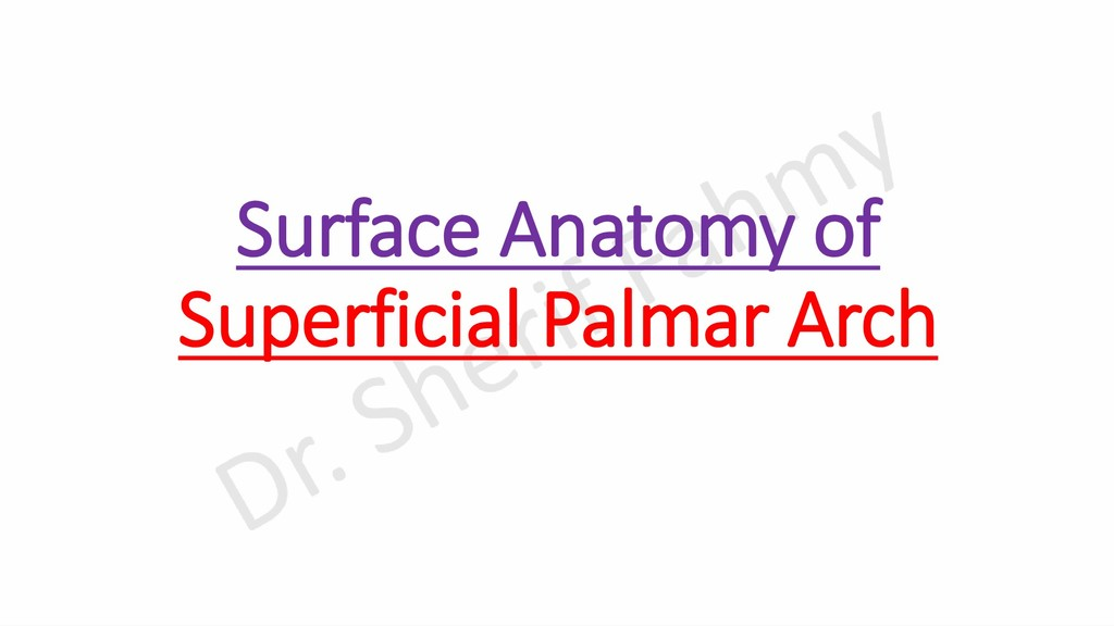 Surface Anatomy of Superficial Palmar Arch