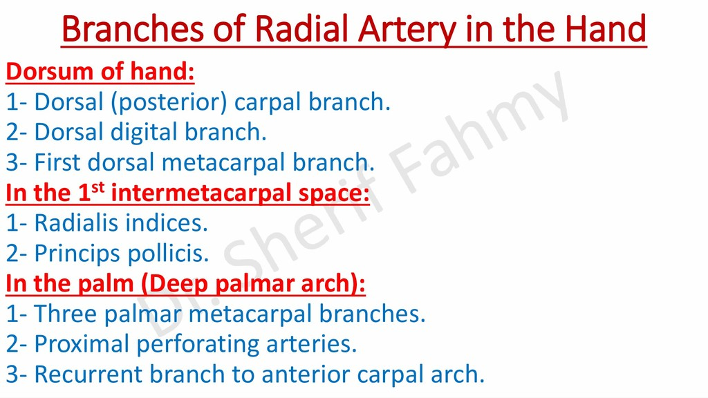 Branches of Radial Artery in the Hand Dorsum of...