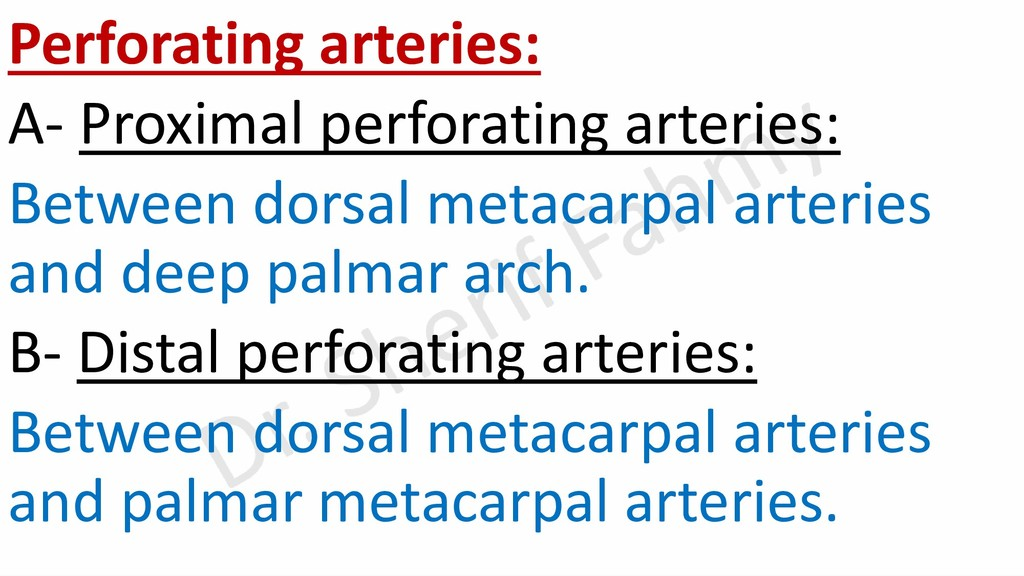 Perforating arteries: A- Proximal perforating a...