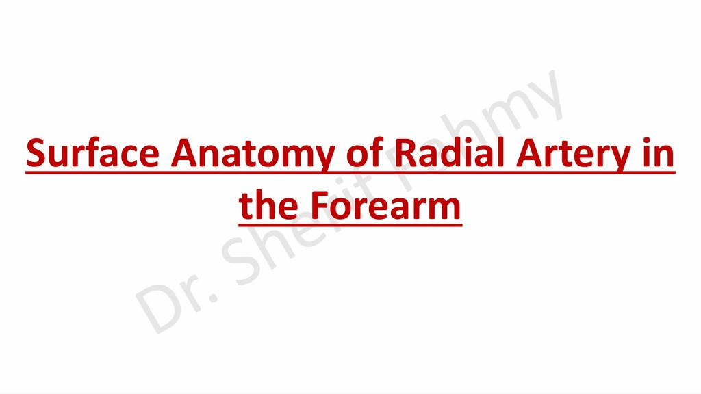 Surface Anatomy of Radial Artery in the Forearm