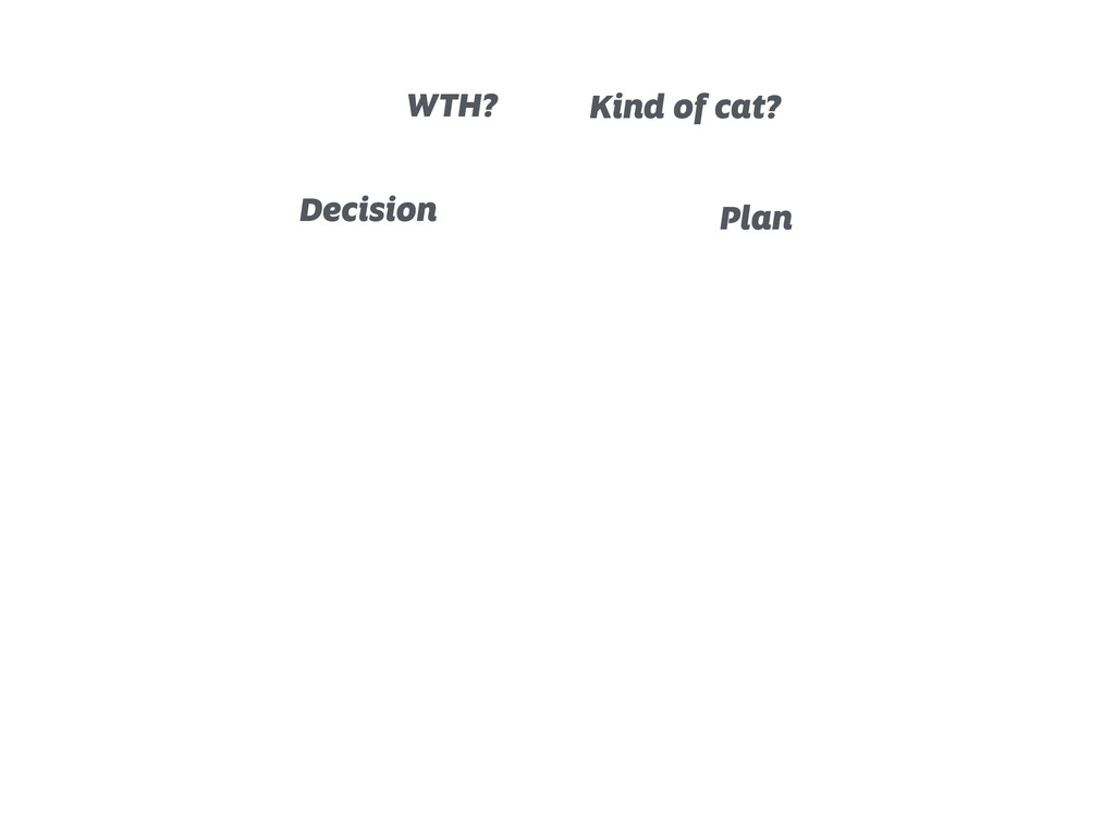Decision WTH? Kind of cat? Plan