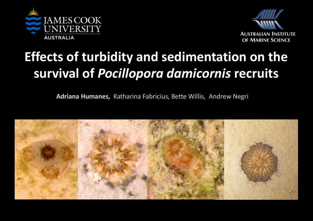 Effects of turbidity and sedimentation on the s...