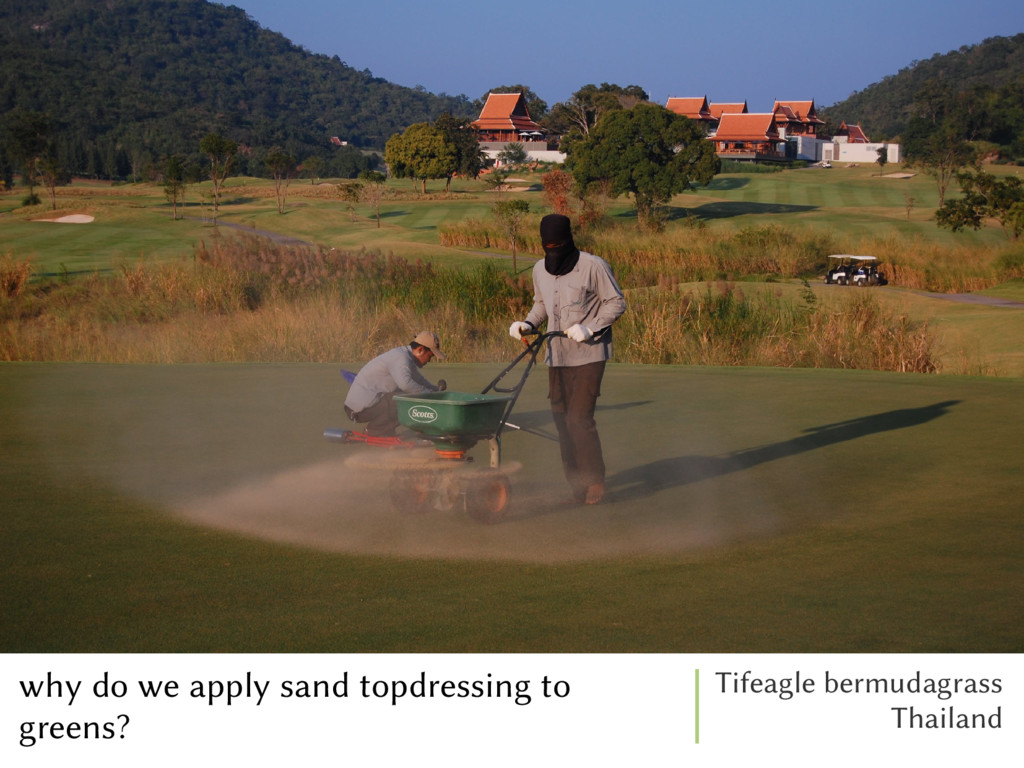 why do we apply sand topdressing to greens? Tif...