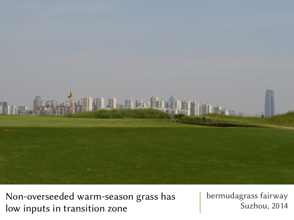 Non-overseeded warm-season grass has low inputs...