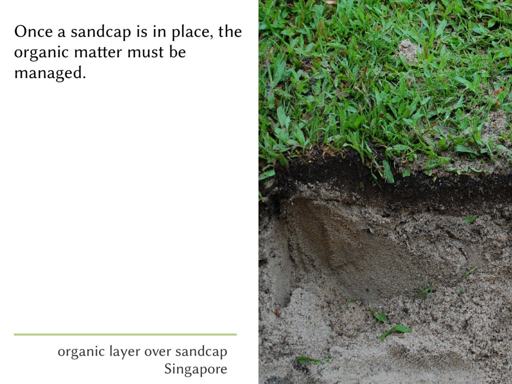 Once a sandcap is in place, the organic matter ...