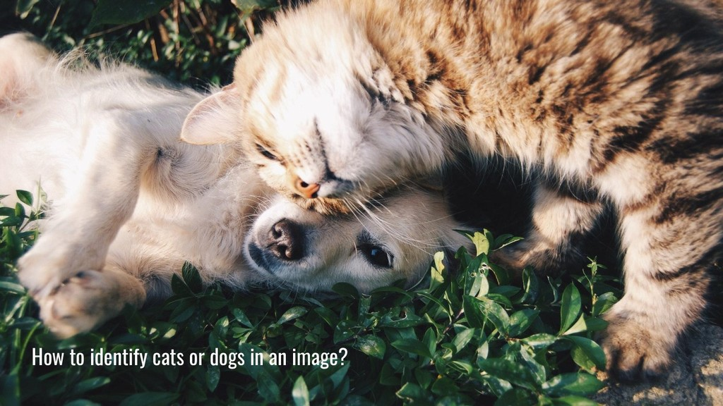 How to identify cats or dogs in an image?