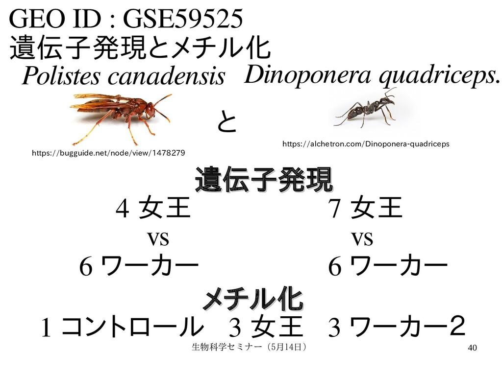 生物科学セミナー(5月セミナー(5月14日)月14日) 40 GEO ID : GSE5952...