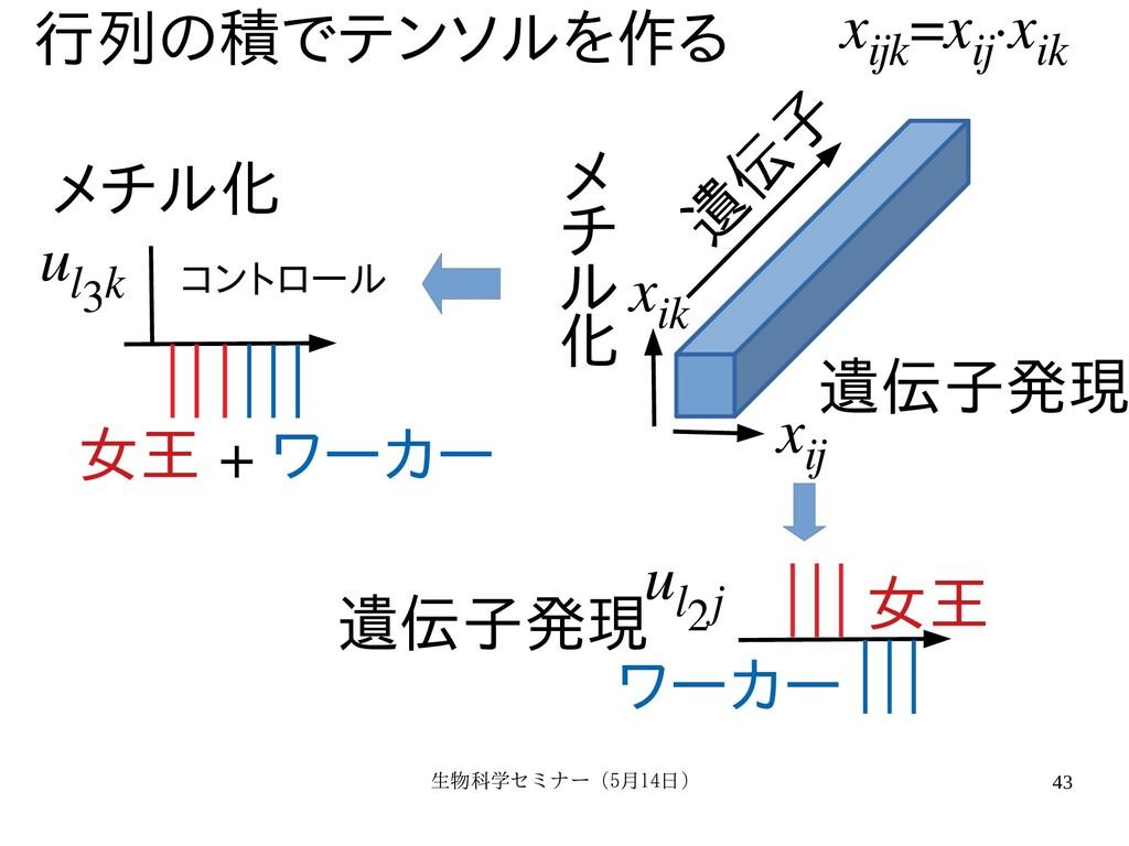 生物科学セミナー(5月セミナー(5月14日)月14日) 43 x ijk =x ij ·x i...