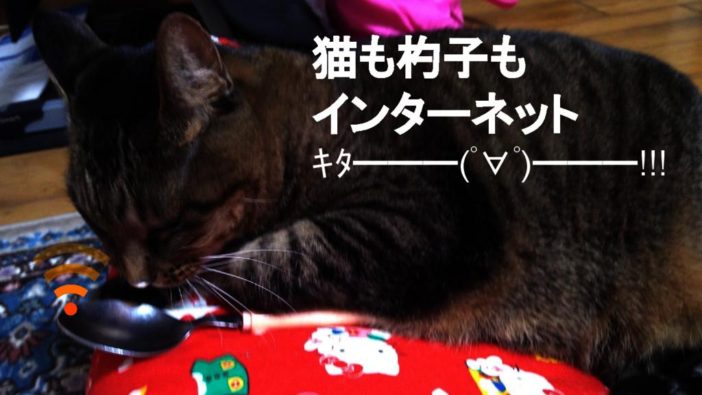 @girlie_mac 猫も杓子も インターネット キタ━━━(゚∀゚)━━━!!!