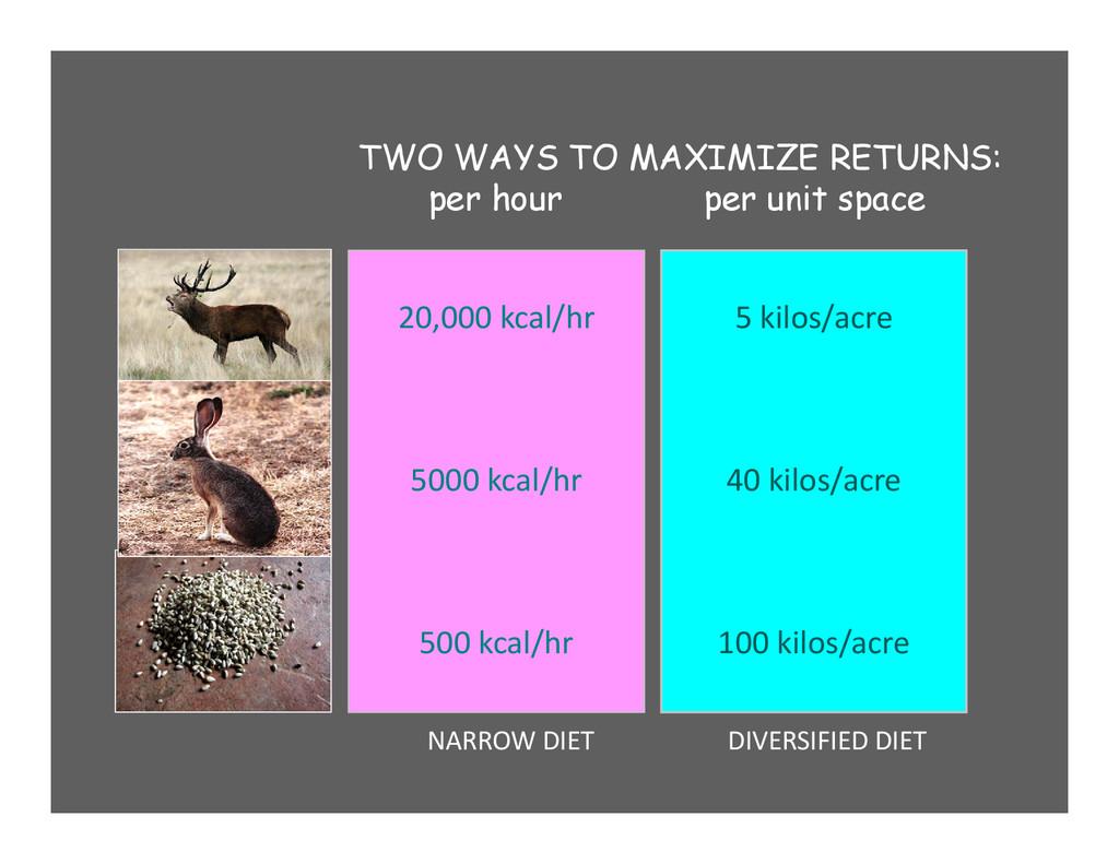 20,000 kcal/hr 5000 kcal/hr 500 kcal/hr 5 kilos...