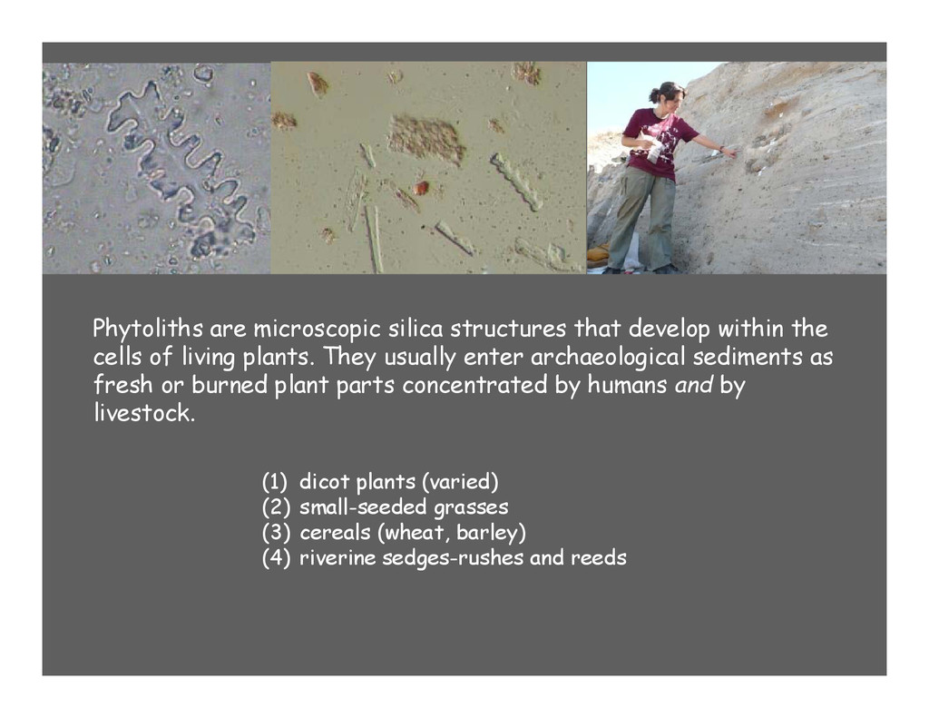 Phytoliths are microscopic silica structures th...