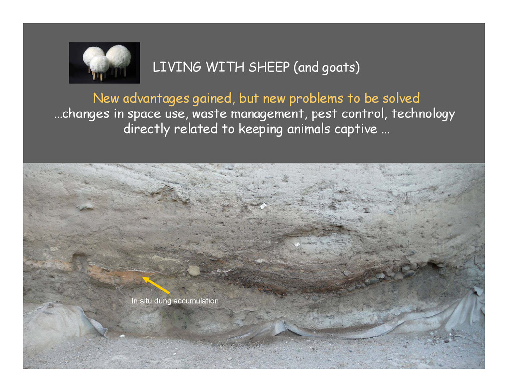 LIVING WITH SHEEP (and goats) New advantages ga...