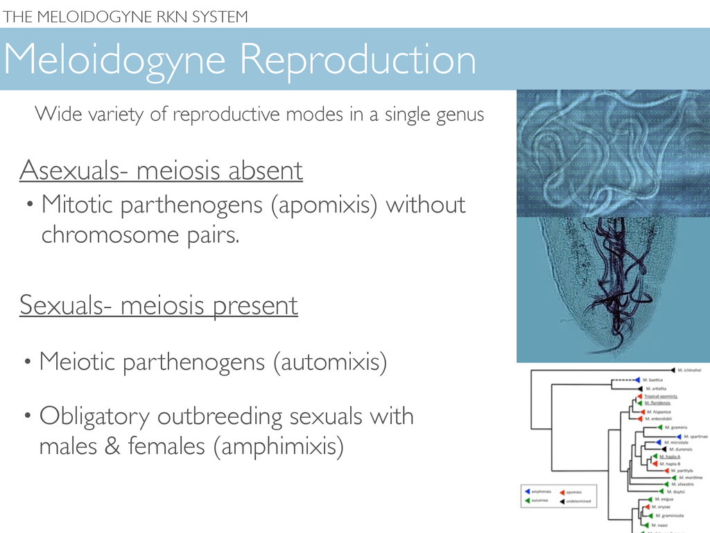 THE MELOIDOGYNE RKN SYSTEM Meloidogyne Reproduc...