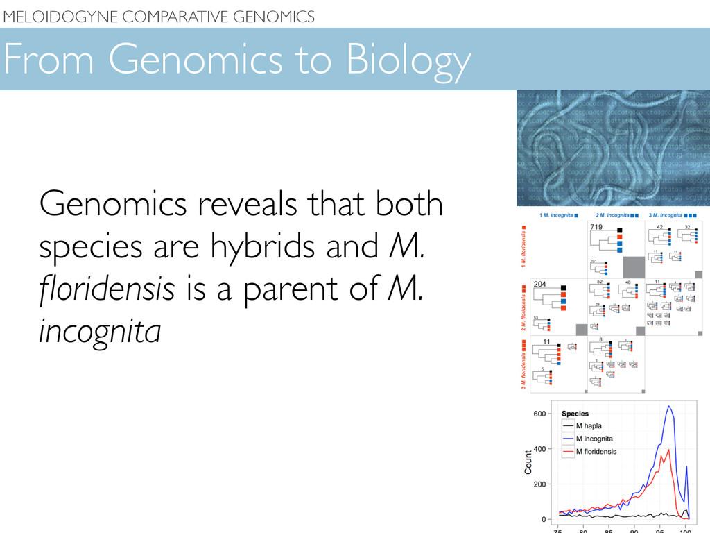 MELOIDOGYNE COMPARATIVE GENOMICS From Genomics ...