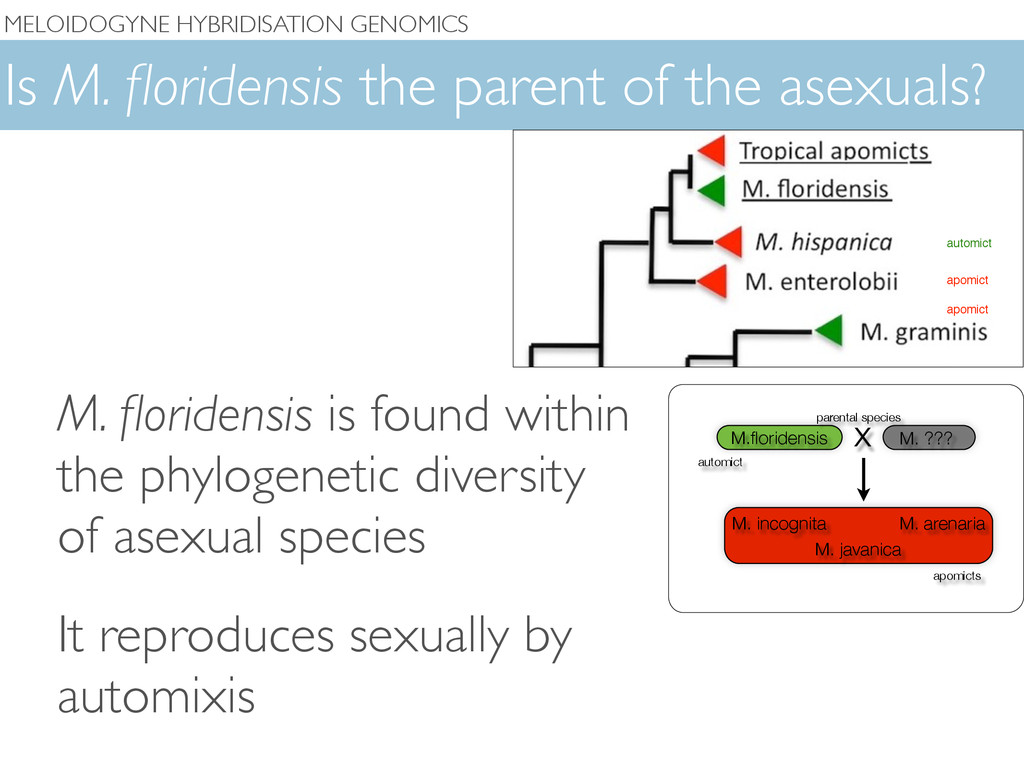 Is M. floridensis the parent of the asexuals? M....
