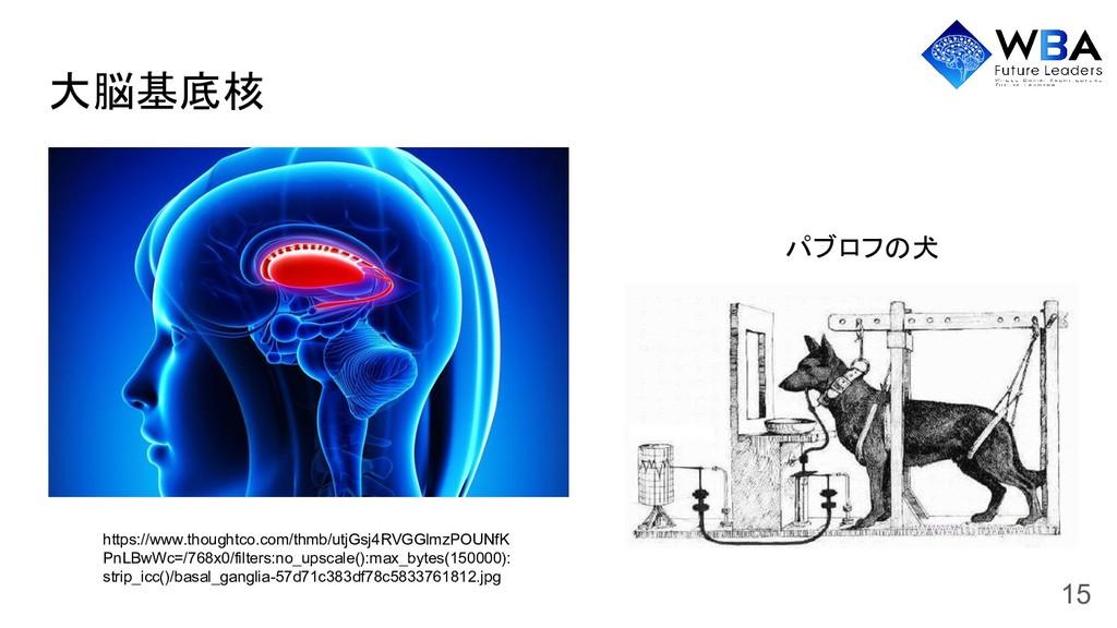 大脳基底核 https://www.thoughtco.com/thmb/utjGsj4RVG...