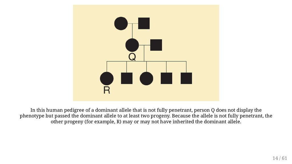 In this human pedigree of a dominant allele tha...