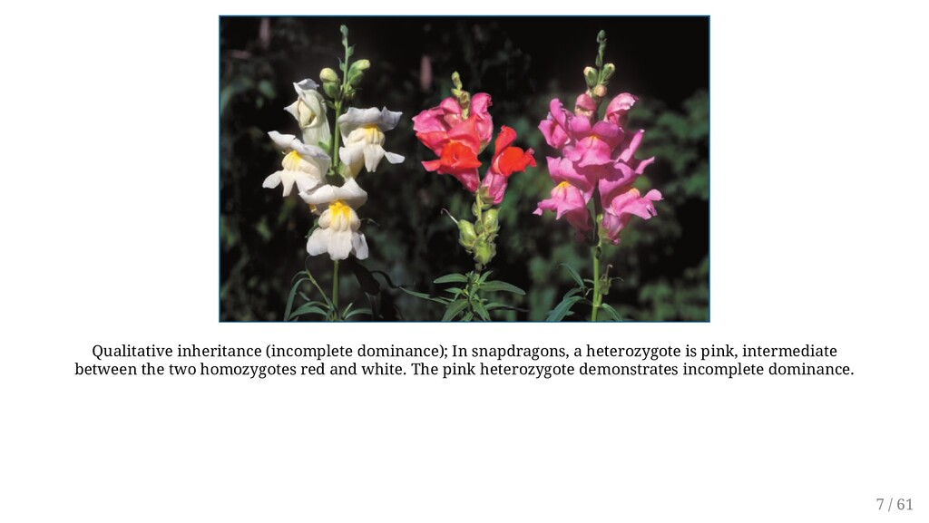 Qualitative inheritance (incomplete dominance);...
