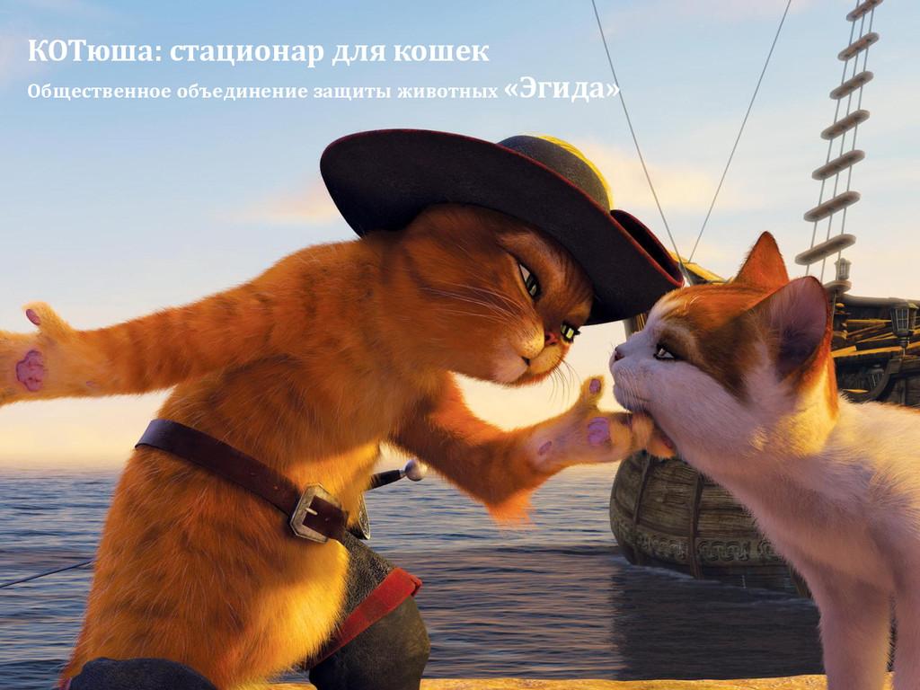 КОТюша: стационар для кошек Общественное объеди...
