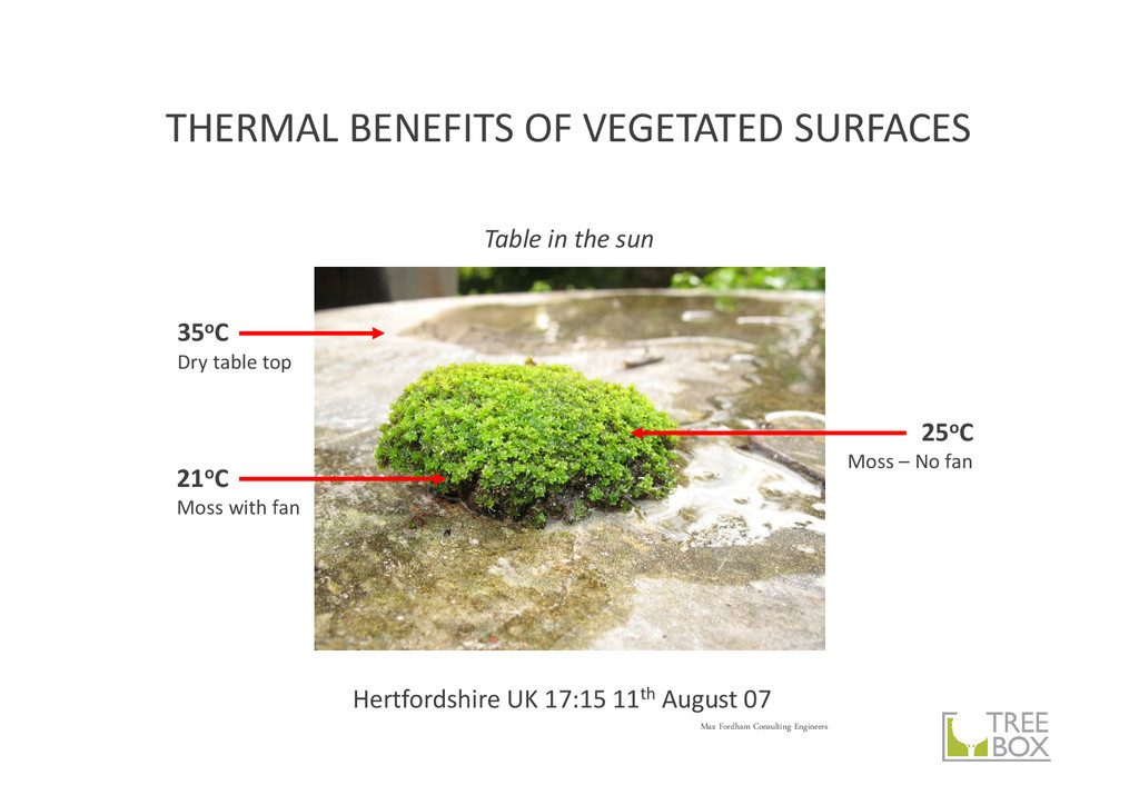 THERMAL BENEFITS OF VEGETATED SURFACES Max Ford...