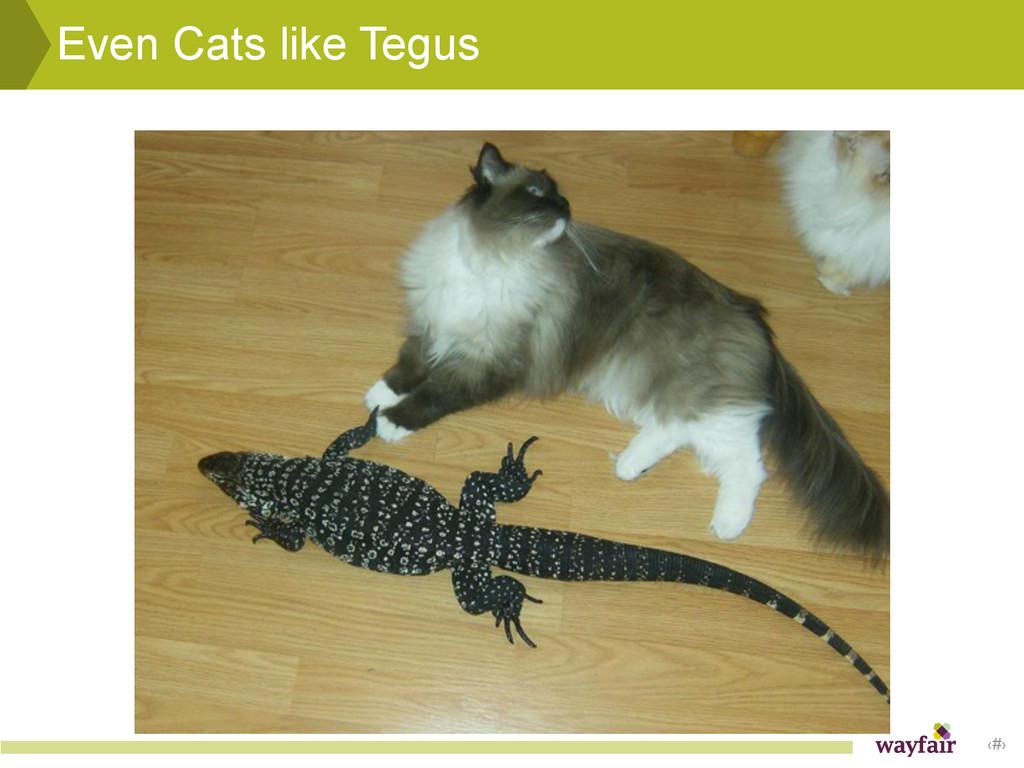 ‹#› Even Cats like Tegus