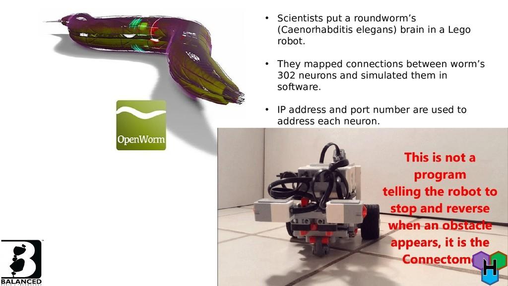 • Scientists put a roundworm's (Caenorhabditis ...