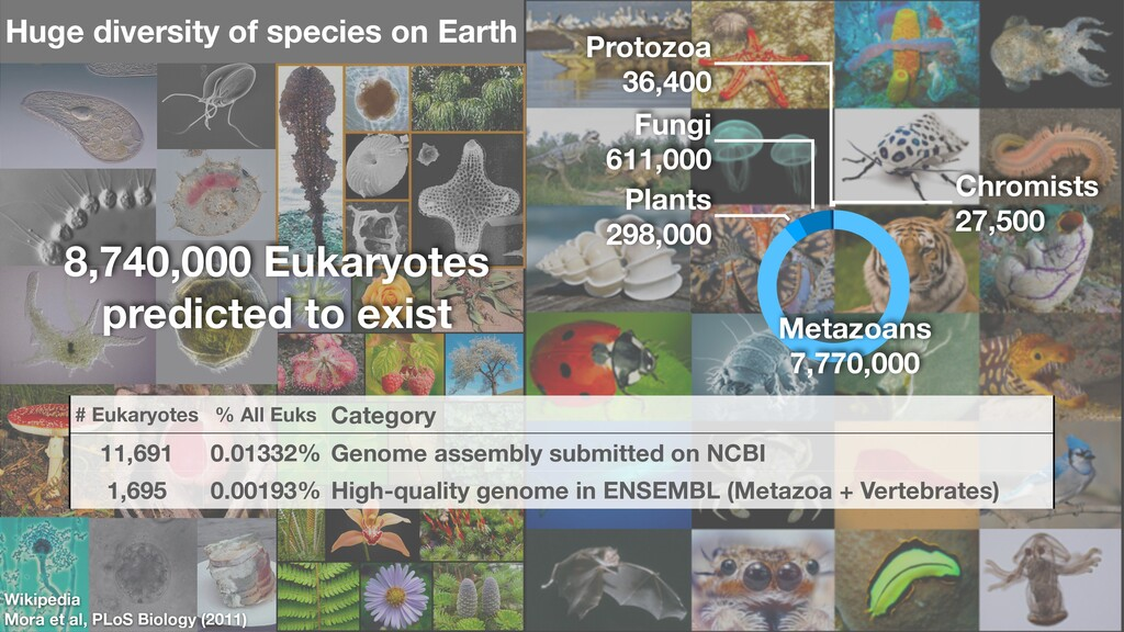 Wikipedia Mora et al, PLoS Biology (2011) Chrom...