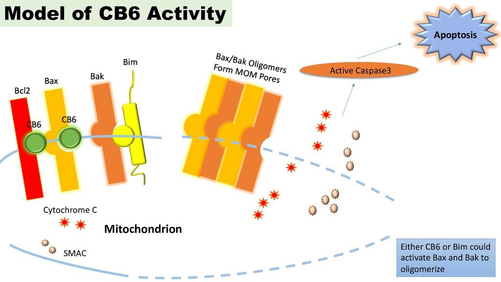 Cytochrome C SMAC Active Caspase3 Apoptosis Mit...