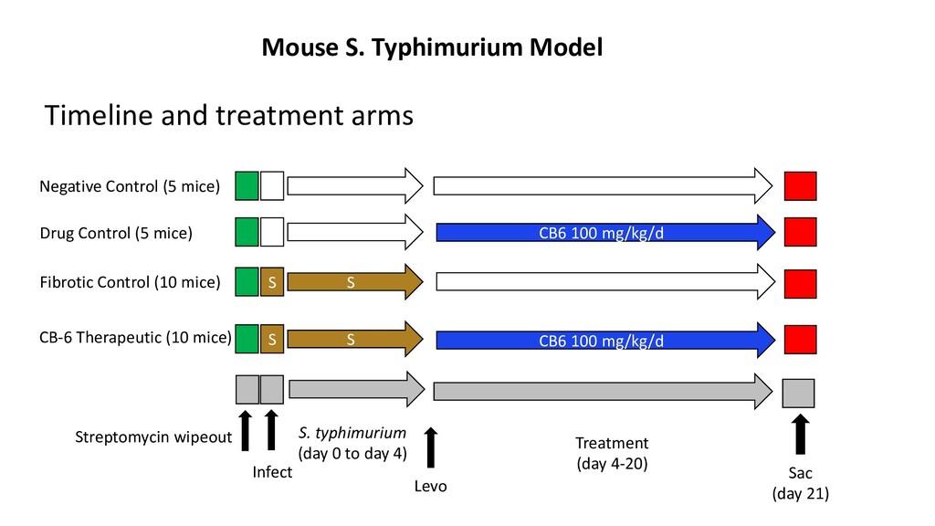 Mouse S. Typhimurium Model Treatment (day 4-20)...