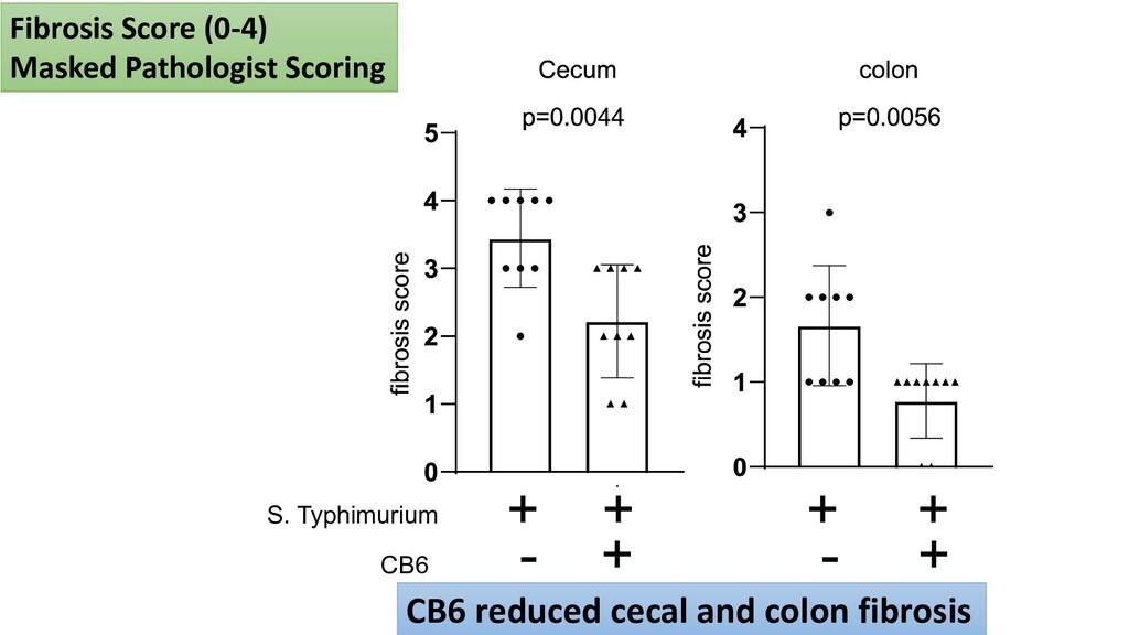 S. Typhimurium CB6 + + + + - + - + Fibrosis Sco...