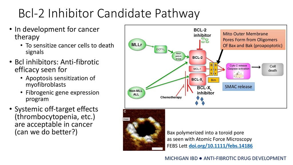 Bcl-2 Inhibitor Candidate Pathway • In developm...