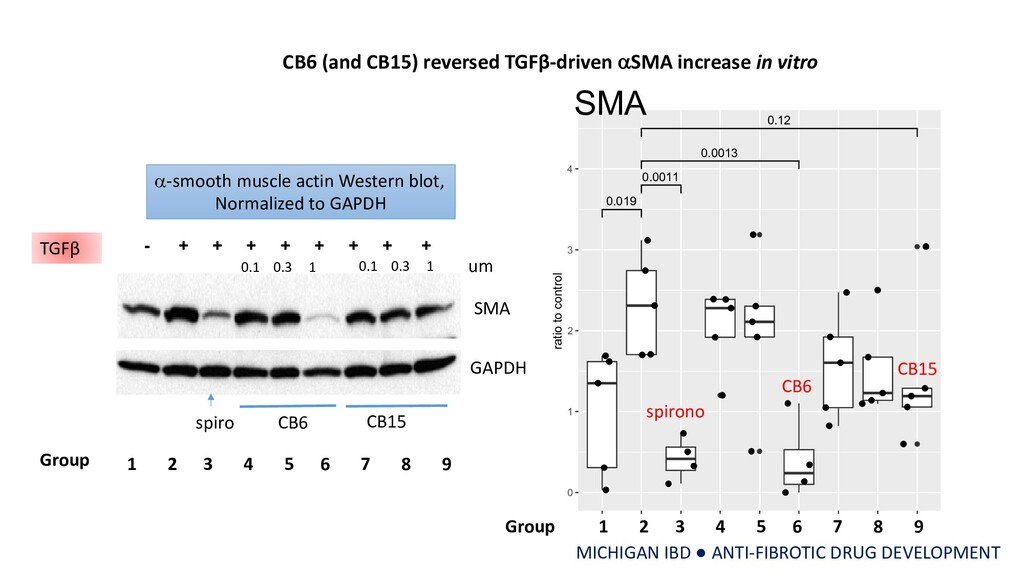 - + + + + + + + + TGFβ SMA spiro CB6 CB15 GAPDH...