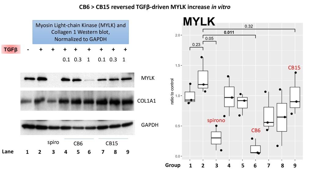MYLK - + + + + + + + + spiro CB6 CB15 0.1 0.3 1...