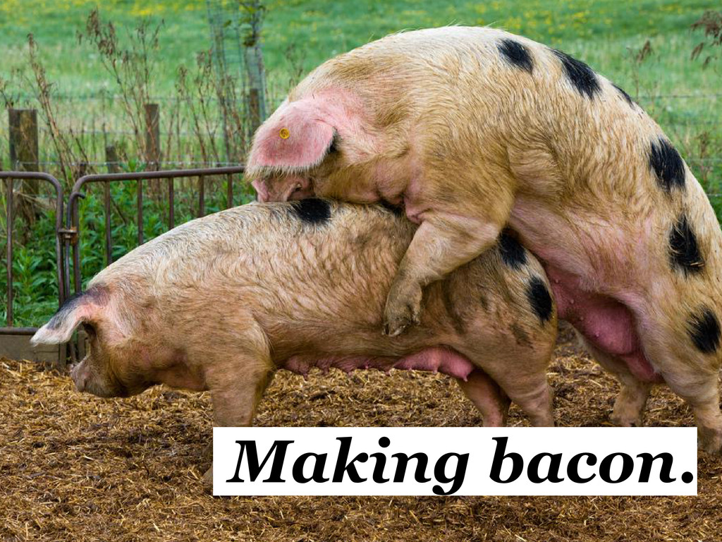 Making bacon.