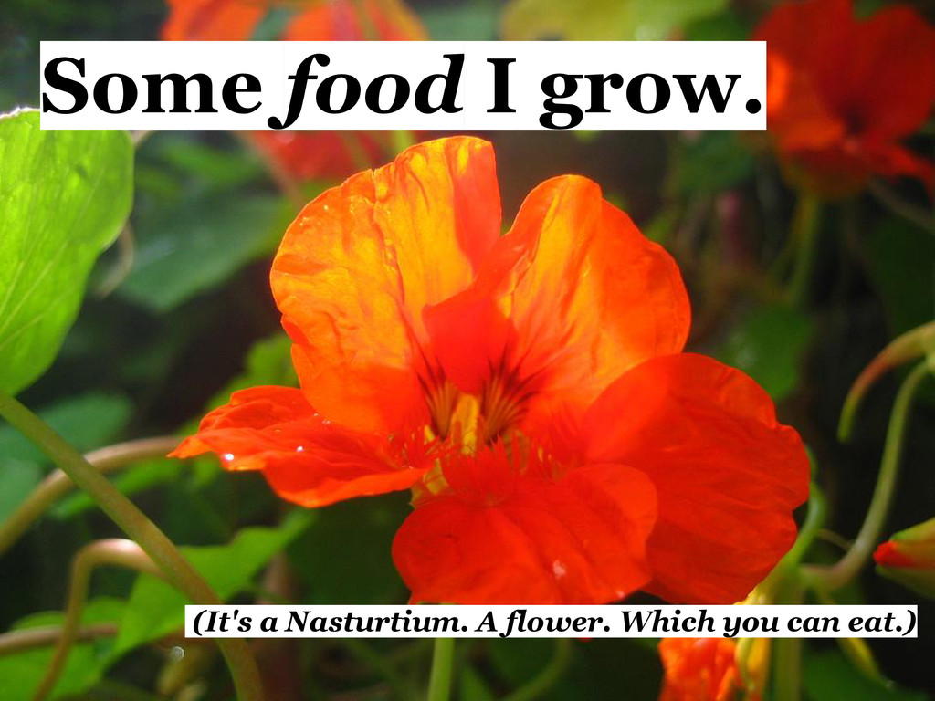 Some food I grow. (It's a Nasturtium. A flower....