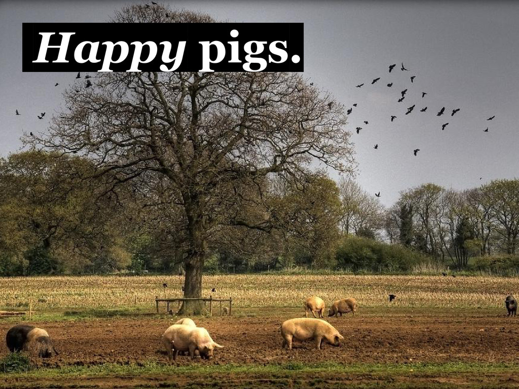Happy pigs.