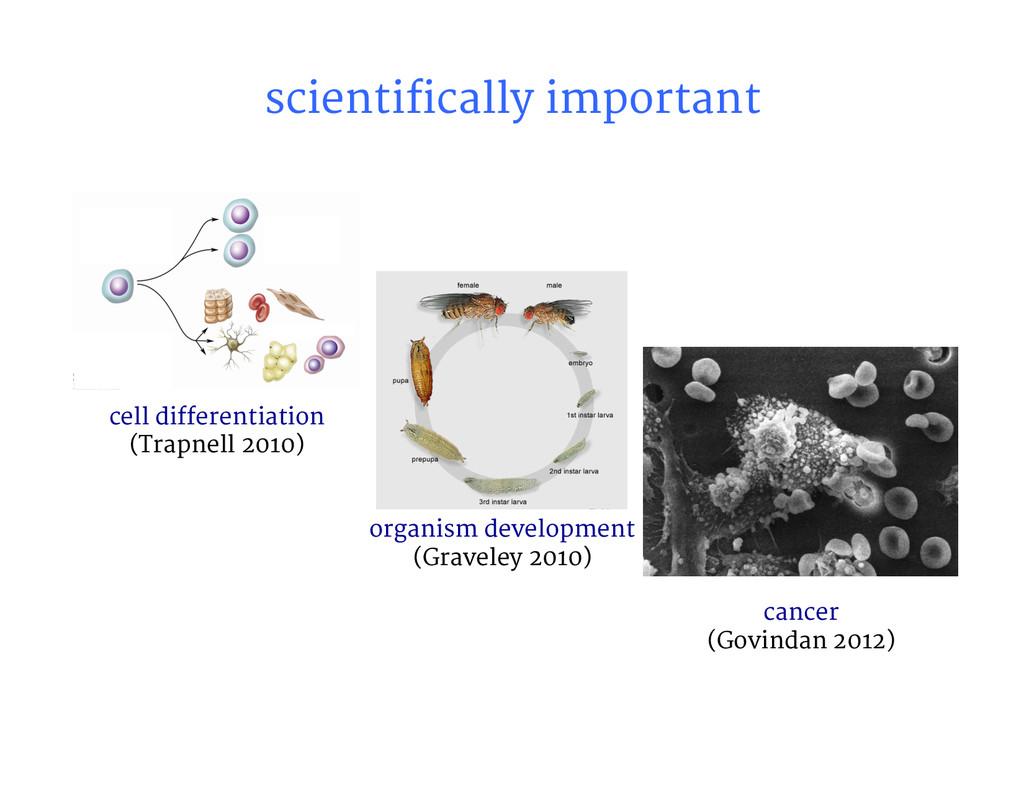 scientifically important  cell differentiati...