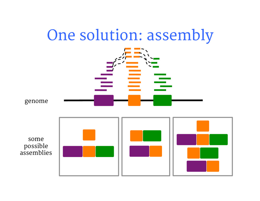 One solution: assembly genome some possible a...
