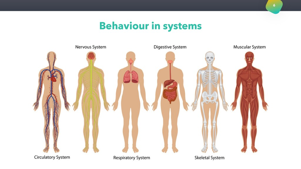 Behaviour in systems 6
